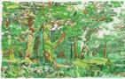 最新工艺版--橡胶林