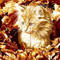 精灵猫-电脑乱针绣图片